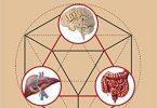 The Complex Interplay Between Gut-Brain, Gut-Liver, and Liver-Brain Axes 1st Edition PDF